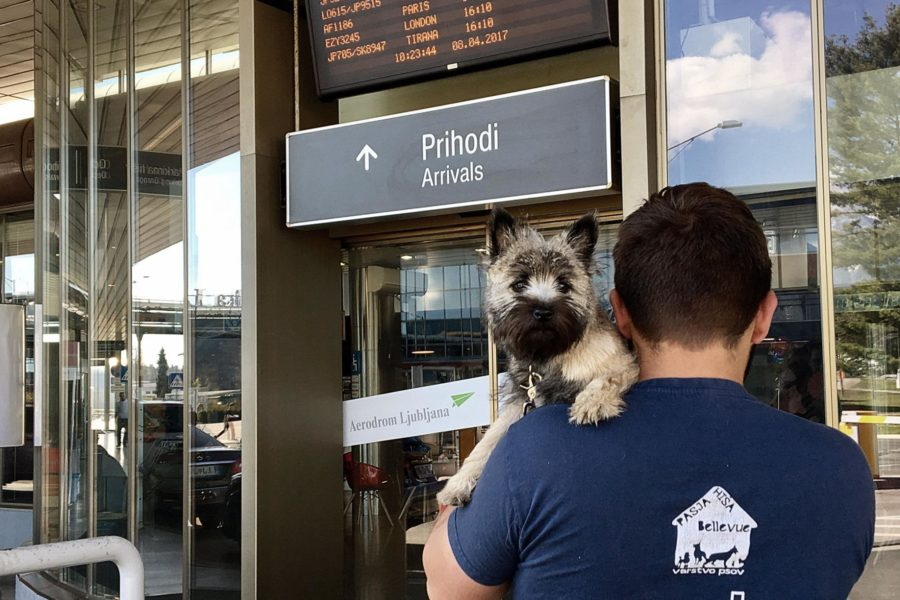 Naj vas kuža pričaka na letališču