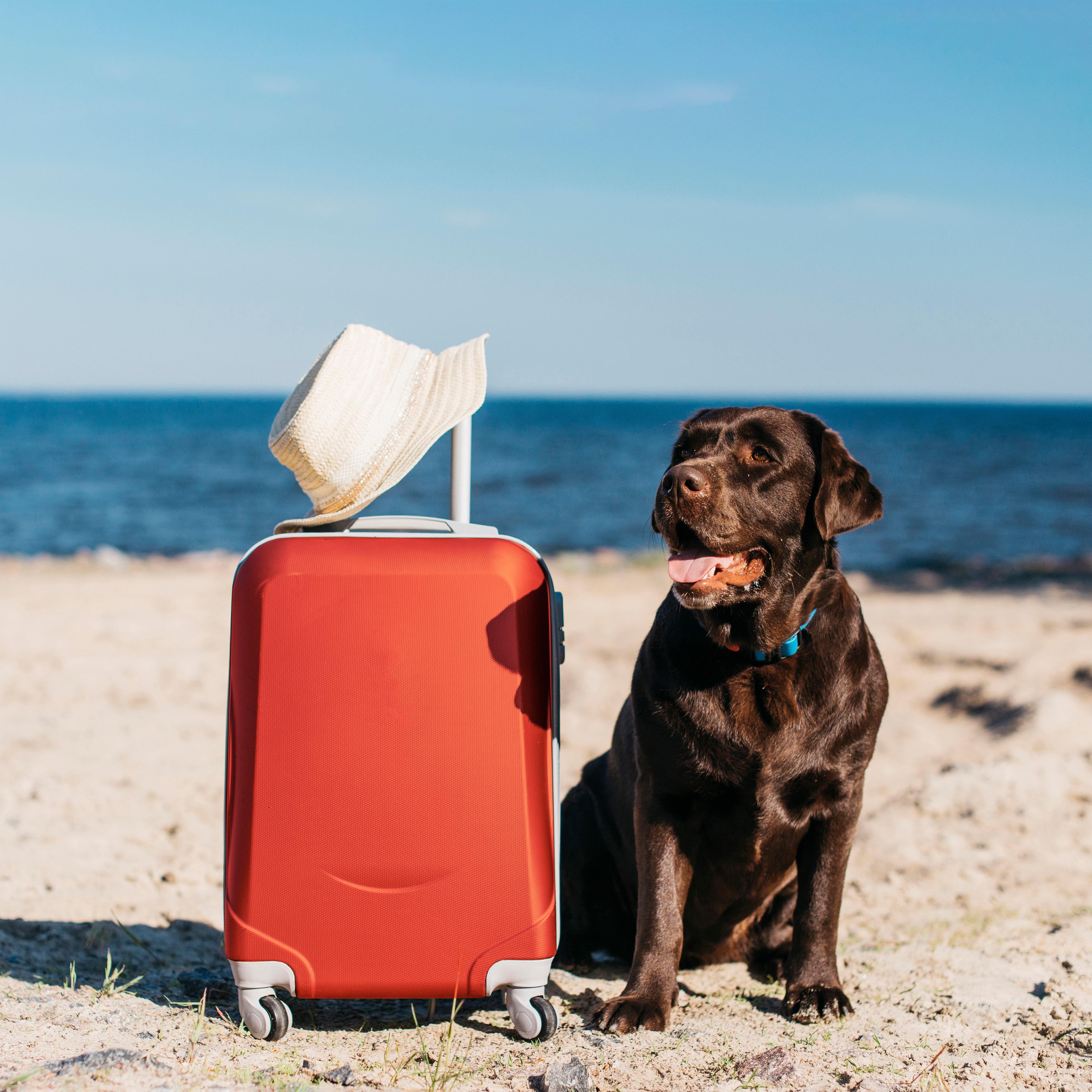 Varstvo psov – kaj naj kuža prinese s seboj v Pasjo hišo?
